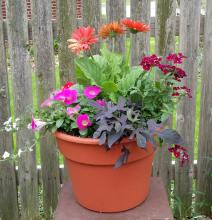 Small Patio Pot