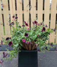 Hanging Basket, wire mixed variety
